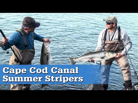 summer-stripers-in-the-cape-cod-canal-|-s13-e8
