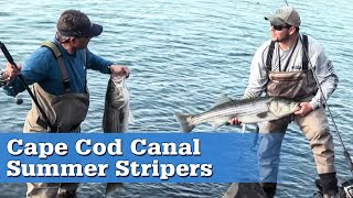 Cape Cod Canal Stripers (Full Episode)