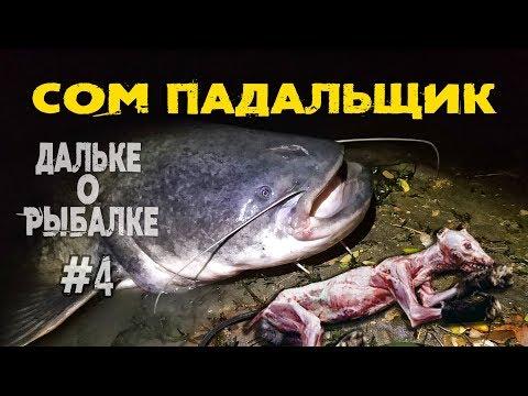 сом падальщик? | #Дальке о рыбалке 4