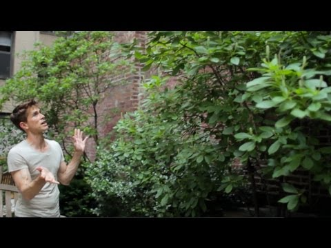 Make Ugly Walls Disappear - Urban Gardener Video