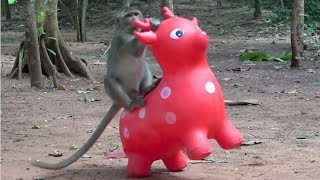 Best games for animals - The most happier monkeys playing with wild deer toy