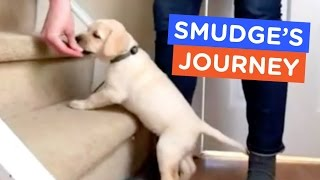 A Guide Dog's Life: Smudge's Journey Ep. 2 | The Dodo thumbnail