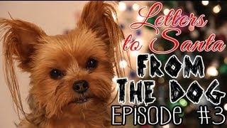 Letters To Santa From The Dog: Episode 3