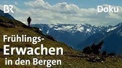 Alpine Jahreszeiten: Frühlingserwachen in den Tegernseer Bergen | Bergauf-Bergab | BR