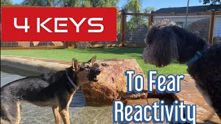 Learn how to help your fearful dog