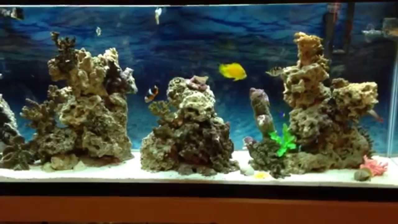 Awesome August 2014 Saltwater Marine Reef Aquarium Aqua Scape 55 Gallon