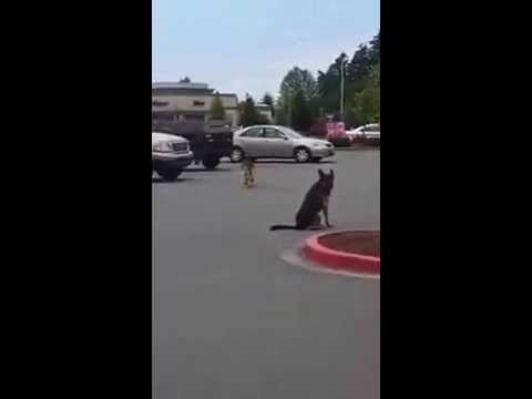 My jaw dropped when I saw what these dogs are trained to do!