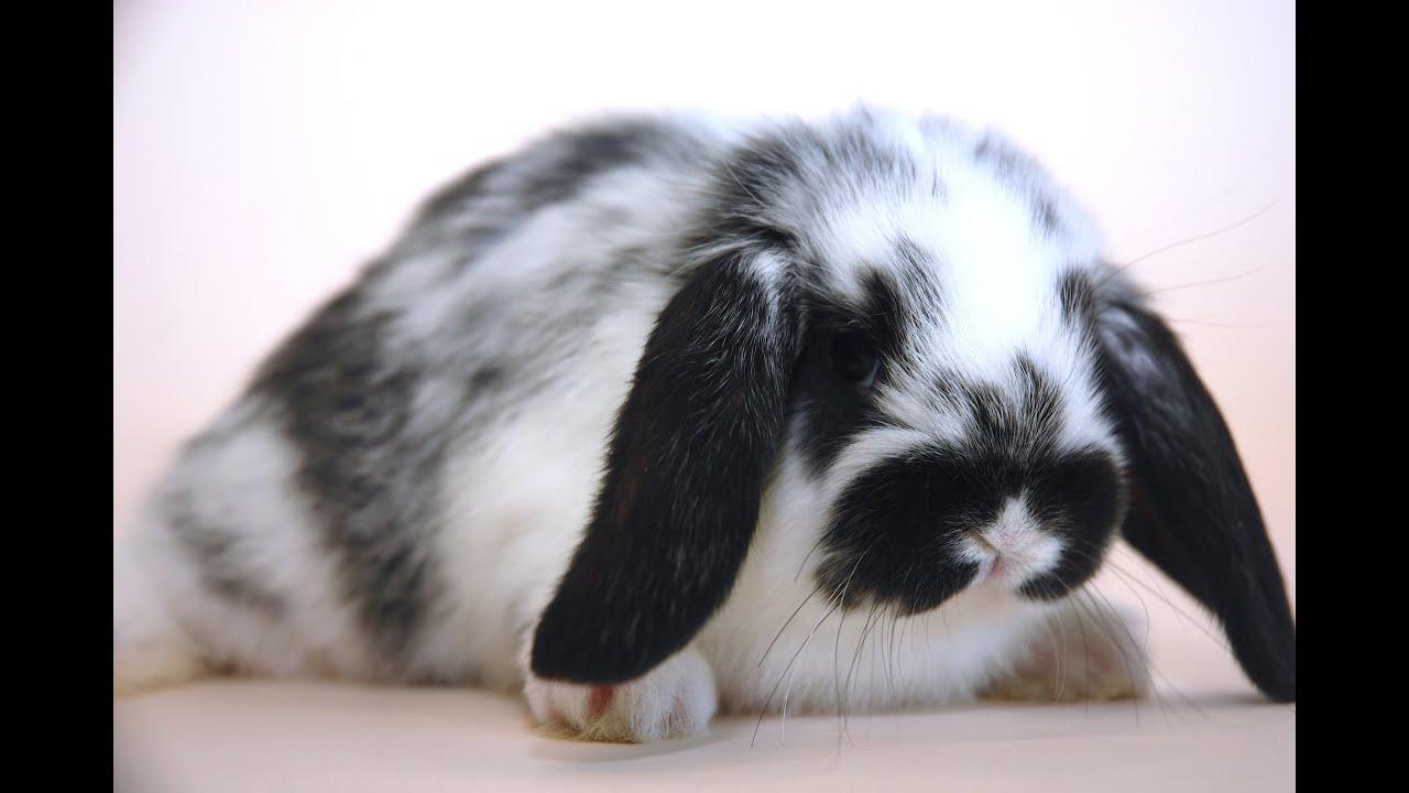 Lapins le premier jour du lapin la maison youtube for Abreuvoir lapin fait maison