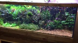 Аквариум травник. Со2. Организация течения.Тумба и обзор растений.