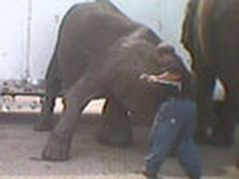 Stop Circus Suffering, USA