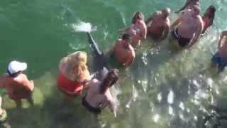 Swimming with the Dolphins - Melia Marina Varadero Cuba