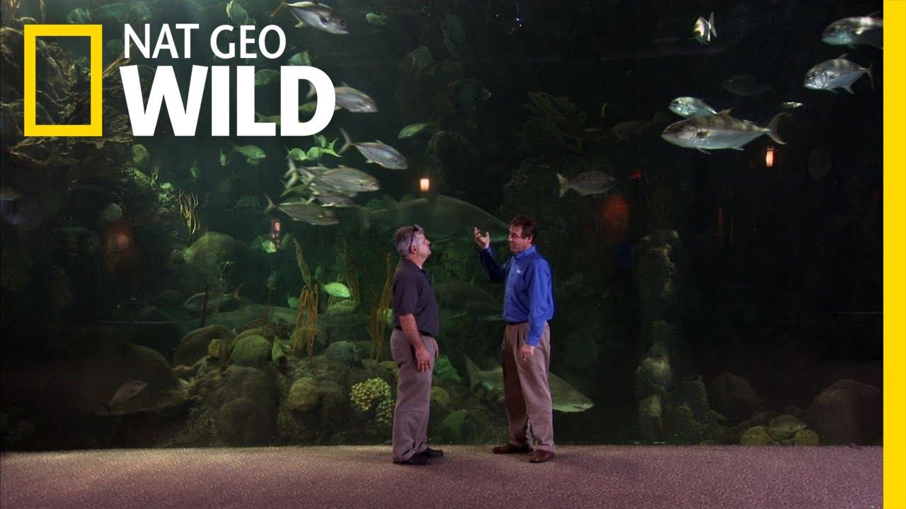 Big project big promises fish tank kings youtube for Fish tank kings