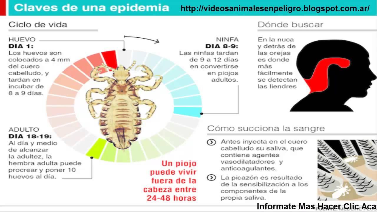 Informacion sobre animales piojos alertan por el uso de for Informacion sobre los arquitectos