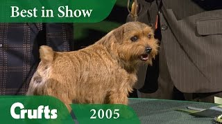 Norfolk Terrier wins Best In Show at Crufts 2005 | Crufts Dog Show