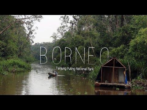 BORNEO: Orangutan In Tanjung Puting National Park