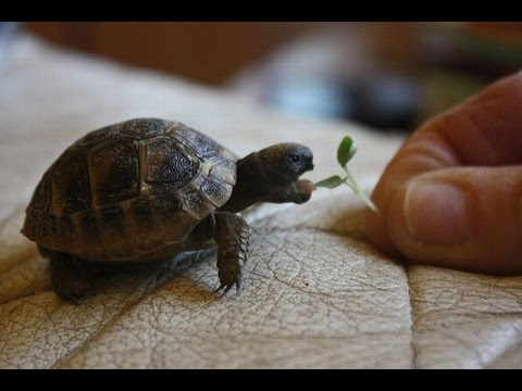 Cute Baby Turtle Get A Helping Hand Youtube
