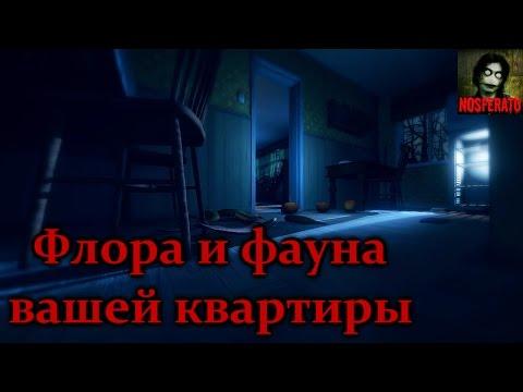 Истории на ночь - Флора и фауна вашей квартиры и как её бояться - Видео онлайн