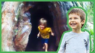 redwood-forest-adventure