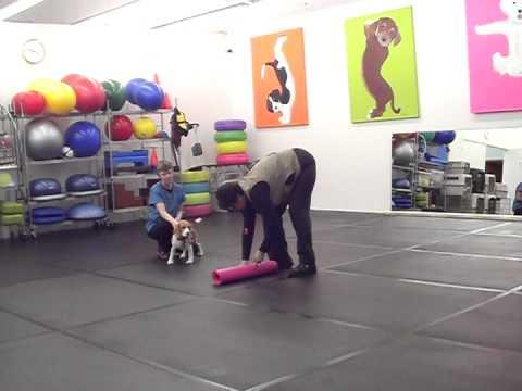 Wag It Games Yoga Mat Rolling Individual