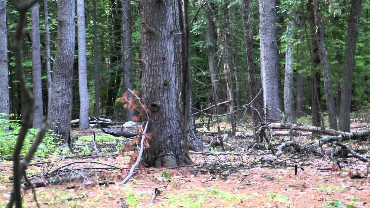 Baby Bigfoot Sighting (Massachusetts) - YouTube