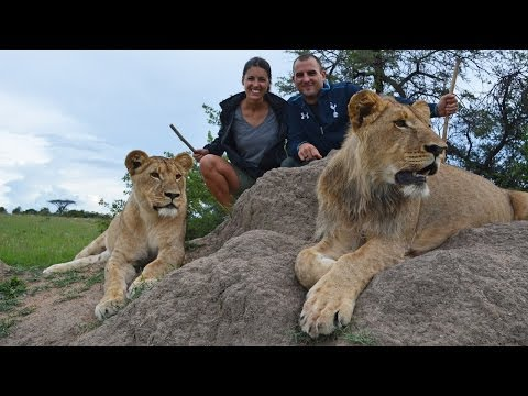 Walking, Eating, and Hunting with the Lions of Antelope Park
