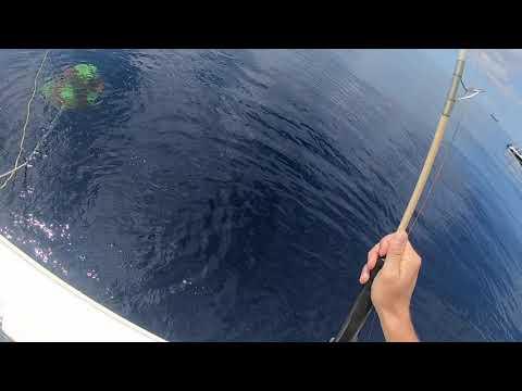 Noosa Offshore