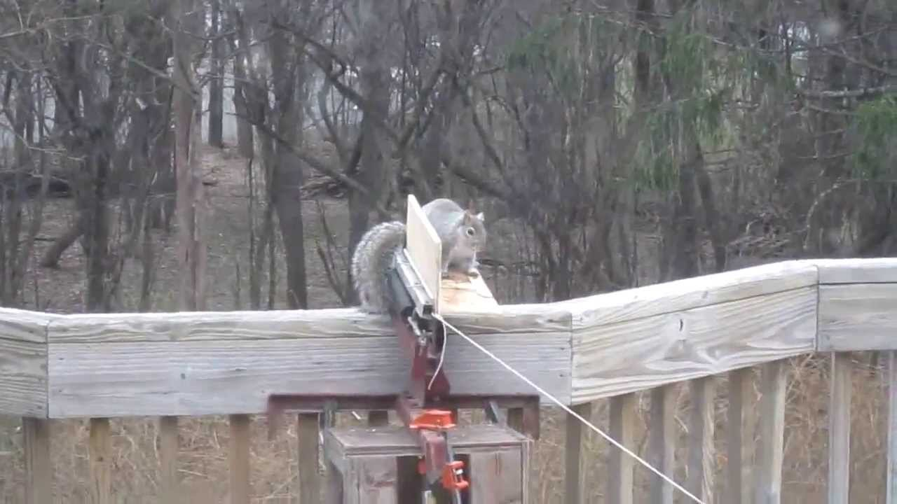 How To Get Rid Of Squirrels You