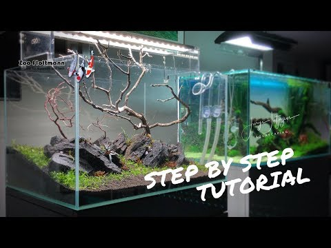 Aquascape Step by Step Tutorial inside Zoo Flottmann - one of the best Aquascaping Shops in Germany