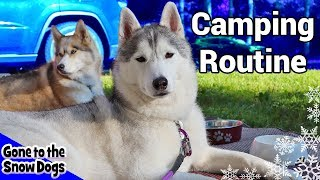 My Dog's Camping Routine | Huskies Camping Routine 2018