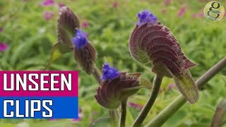 UNSEEN / RARE GARDENING VIDEO FOOTAGES AND STOCK PHOTOS - CHRISTMAS & NEW YEAR 2019