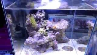 Newa More nano reef tank