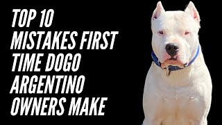 TOP TEN MISTAKES FIRST TIME DOGO ARGENTINO OWNERS MAKE