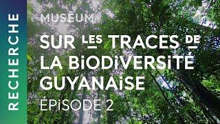Épisode 2 : La capture photographique | Sur les traces de la biodiversité guyanaise