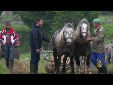 هذا الصباح-جر الخيول للأثقال يثير استهجان منظمات حقوقية  - 13:21-2017 / 6 / 26