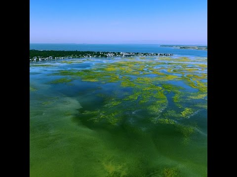 Aerial view of Edisto Beach, South Carolina