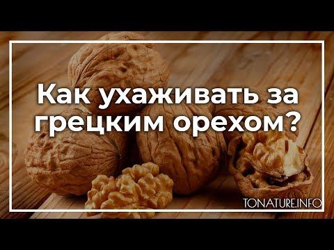 Как ухаживать за грецким орехом