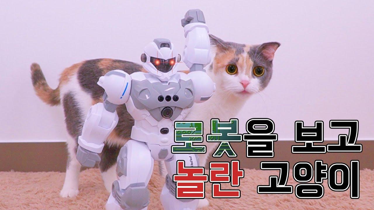 움직이는 로봇을 본 고양이의 반응 | 고양이산책