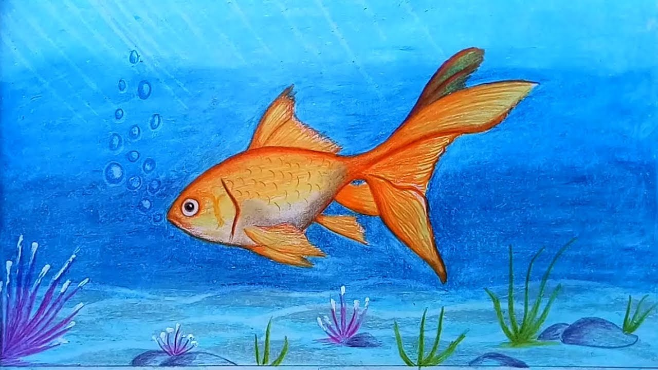 It is a picture of Wild Fish Drawing Images