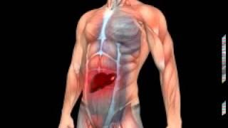 Галитоз - неприятный запах изо рта(Галитоз - это медицинский термин, обозначающий неприятный запах изо рта. С этим весьма распространенным..., 2013-12-09T10:03:46.000Z)