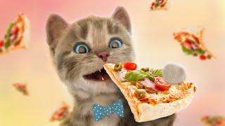 Little Kitten & Friends Learn with the cutest cat - Educational Learning Kids Videos #346