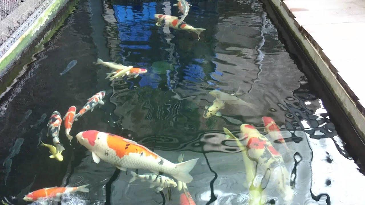 02 08 2016 koi pond youtube for Koi pond removal