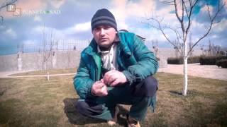 видео Уход за молодым газоном