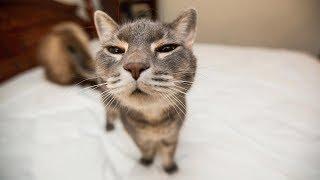 Funny CATS - PREPARE to LAUGH