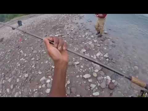 Pink salmon fishing 2017