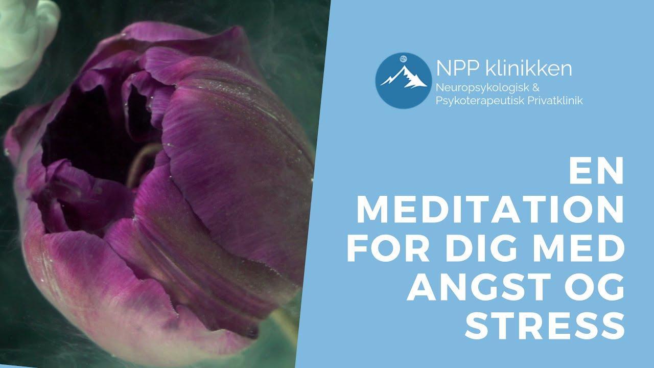 En meditation for dig med angst og stress   Meditationer   NPP klinikken