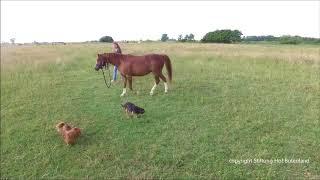 """Von """"großen"""" Hunden und kleinen Pferden"""