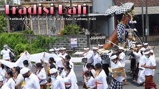 Download NGARAK KULKUL ( KENTONGAN ) SEBELUM DILINGGIHKAN DIBALE KULKUL