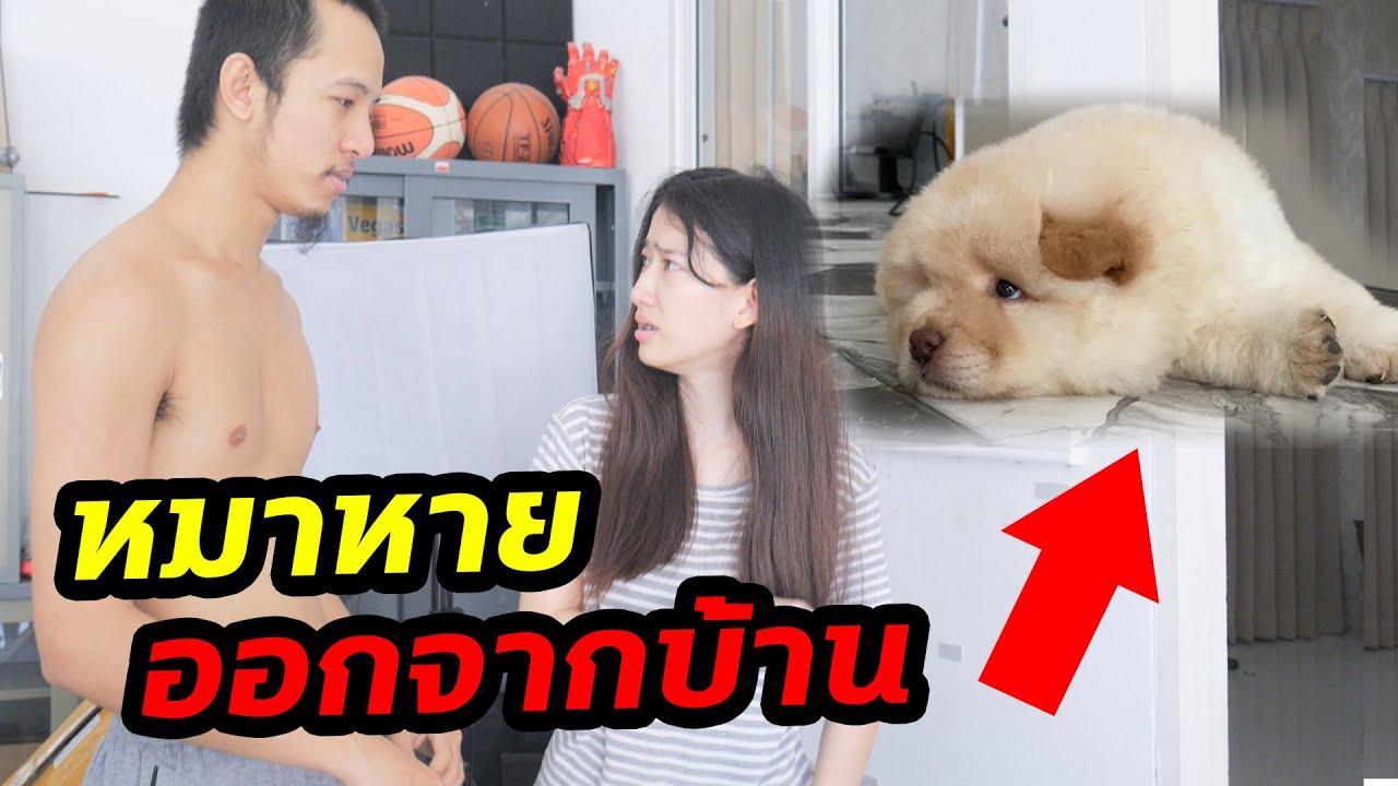 หมาตัวละแสนหาย ตามหาบ้านแตก !!