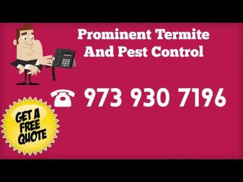 Pest Control NJ Services Termites Bedbugs All Insects And Animal Control Cockroaches Mice Rats Ants