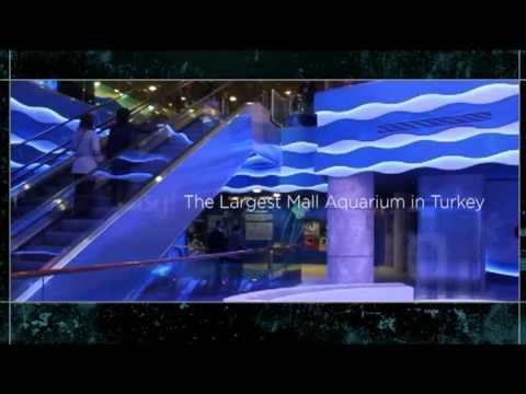 Aqua Vega Aquarium - YouTube